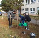 Výsadba stromečků